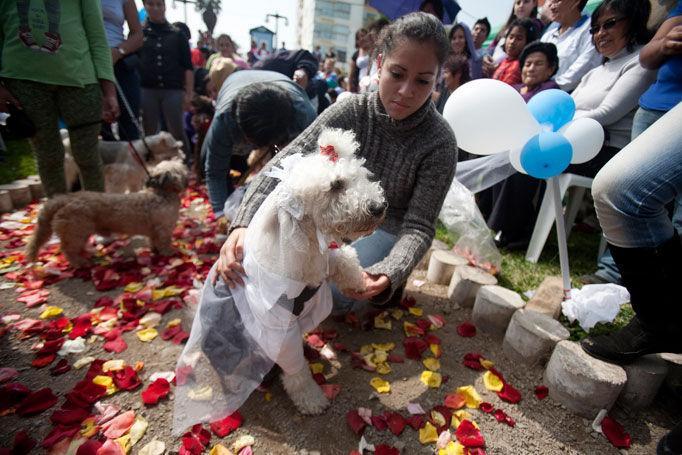 Foto: Şi căţeii care se iubesc – se căsătoresc!