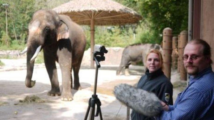 Elefantul care a învăţat singur să vorbească