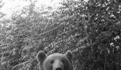 Ursu înrolat în armată! (Foto)