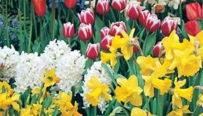 Florile de primăvară – medicament emoțional
