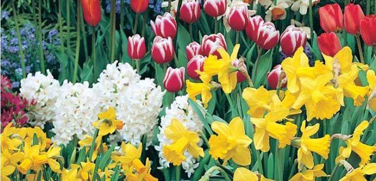 Foto: Florile de primăvară – medicament emoțional