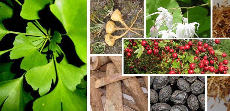 Foto: Plantele ce cresc dorința sexuală