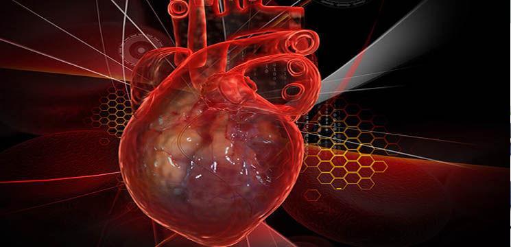 Inima poate fi crescută artificial!