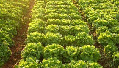 Salata este mai periculoasă decât produsele fast-food