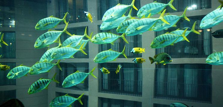 Foto: Aqua Dom – acvariul cu lift în interior!