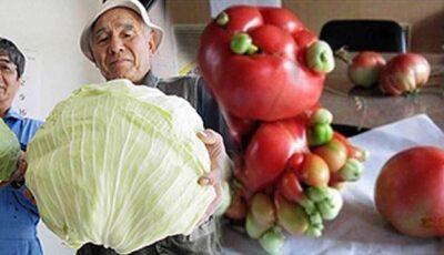 Japonezii strâng legume și fructe mutant, după doi ani de la Fukushima