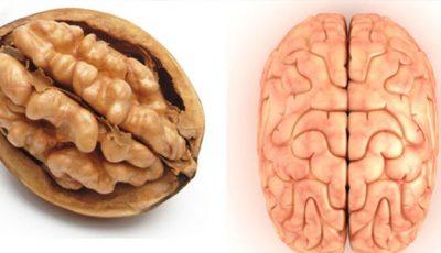 Vezi cât de izbitor seamănă alimentele cu organele corpului uman