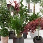 Foto: De ce e bine să ţii aceste plante în casă
