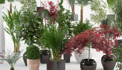De ce e bine să ţii aceste plante în casă