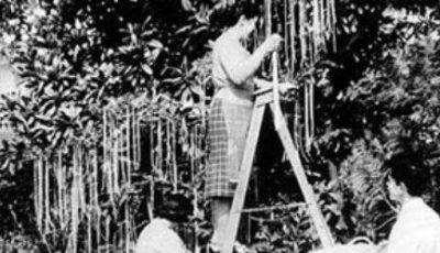 Cum cresc spaghete în copaci.  Prima păcăleală de 1 Aprilie din istoria televiziunii!