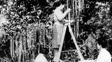 Foto: Cum cresc spaghete în copaci.  Prima păcăleală de 1 Aprilie din istoria televiziunii!