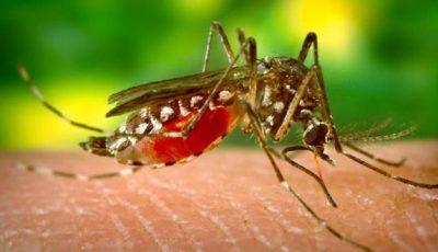 Remedii naturale pentru înţepături de ţânţari