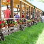 festival-medieval-vatra-2014-3-840x559