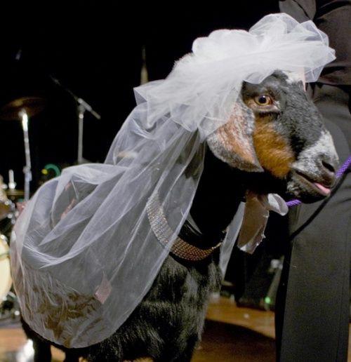 S-au căsătorit cu animale. Vezi cum arată cățelușa mireasă
