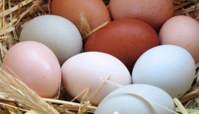 Poţi mânca în fiecare zi câte un ou sau nu? Ce spun nutriţioniştii