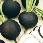 product_gallery_large_1299237149_GD010452-Pflanzen-Gemuesepflanzen-Knollen-und-Wurzelgemuese-Rett_7757c387-9d26-e428-4946-93876236b23e