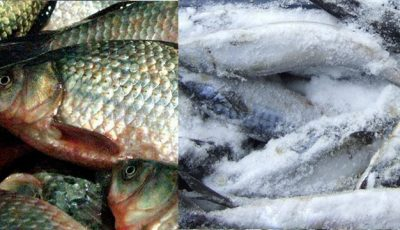 Mâncăm peşte proaspăt sau congelat?