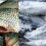 Foto: Mâncăm peşte proaspăt sau congelat?