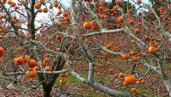 Copiii adoră aceste fructe, sunt o sursă bună de vitamine şi minerale