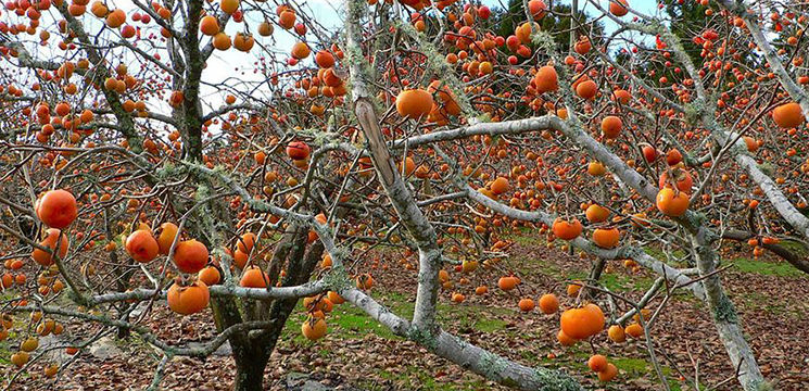 Foto: Copiii adoră aceste fructe, sunt o sursă bună de vitamine şi minerale