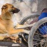 Foto: O lecție de iubire și loialitate: un câine își ajută stăpânul paralizat să supraviețuiască
