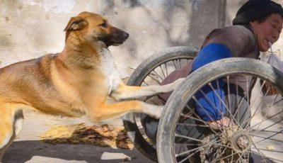 O lecție de iubire și loialitate: un câine își ajută stăpânul paralizat să supraviețuiască