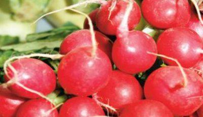 Ridichile roşii scad colesterolul, luptă cu tumorile şi infecţiile urinare