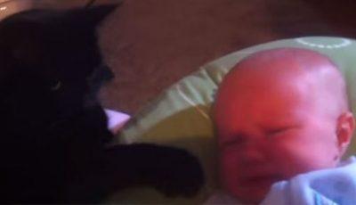 Video impresionant! Cum adoarme o pisică un bebeluș care plânge