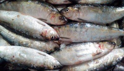 Peşte infestat cu paraziţi, într-un magazin din Capitală!
