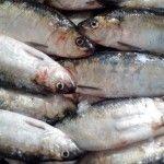 Foto: Peşte infestat cu paraziţi, într-un magazin din Capitală!