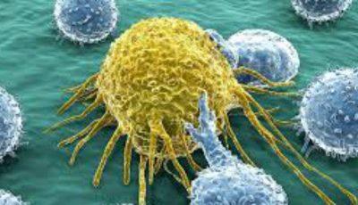 Planta care distruge 98% din celulele canceroase