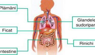 Află ce organ are nevoie de detoxifiere urgentă