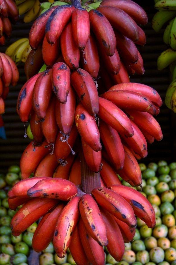 5-varietati-de-banane-de-care-n-ai-auzit-pana-acum_1