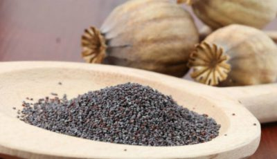 Studiu: Semințele de mac ajută la vindecarea completă a osteoporozei