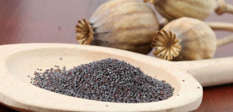 Foto: Studiu: Semințele de mac ajută la vindecarea completă a osteoporozei