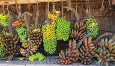 5 tipuri de banane de care n-ai auzit până acum