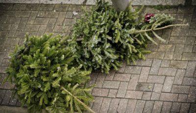 Ce să faci cu bradul de Crăciun după Sărbători!
