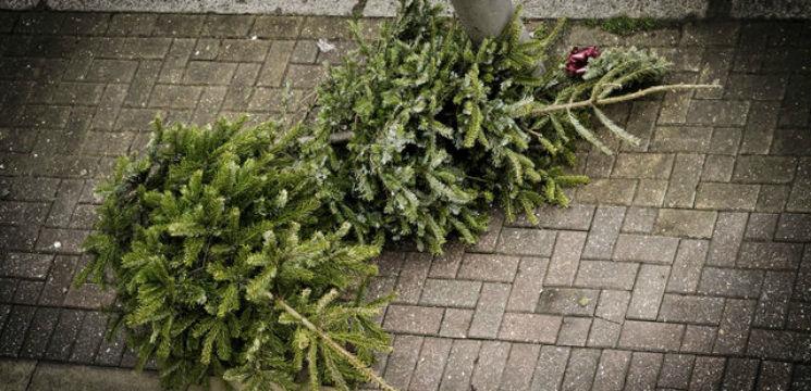 Foto: Ce să faci cu bradul de Crăciun după Sărbători!