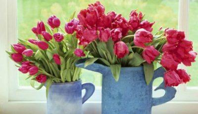 Cum să faci ca florile să nu se ofilească mult timp!