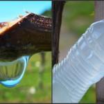 Foto: Lacrimile viţei de vie, un leac natural pentru ulcior, acnee şi întărirea imunităţii