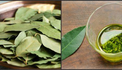 Frunzele de dafin sunt medicamentul la îndemână din casa ta! Iată cum şi când le poţi folosi
