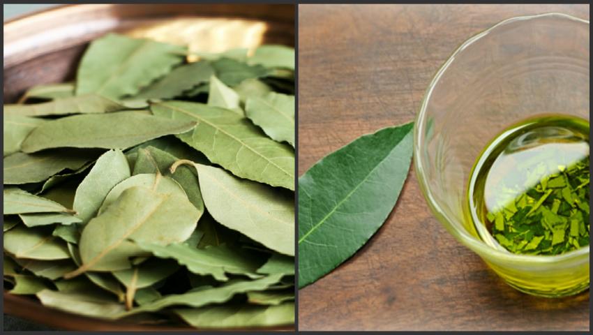 Foto: Frunzele de dafin sunt medicamentul la îndemână din casa ta! Iată cum şi când le poţi folosi