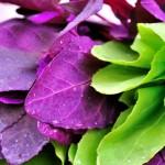 Foto: Loboda – beneficiile pentru sănătate şi slăbit!