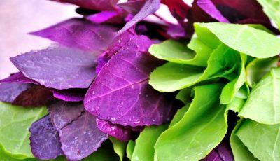 Loboda – beneficiile pentru sănătate şi slăbit!