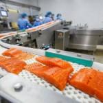 """Foto: Toxicolog: ,,Somonul de crescătorie – cel mai toxic aliment din lume!"""""""