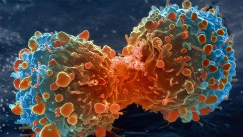 Celule-