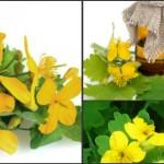 Foto: Remedii naturiste cu rostopască! Cum le foloseşti şi la ce te ajută