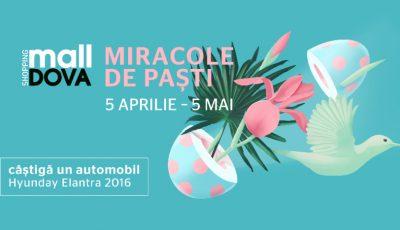 Miracolele de Paști încep pe 5 aprilie!