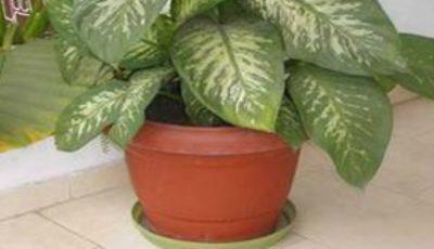 Ai aşa ceva în casă? Această plantă te poate ucide în mai puţin de un minut!