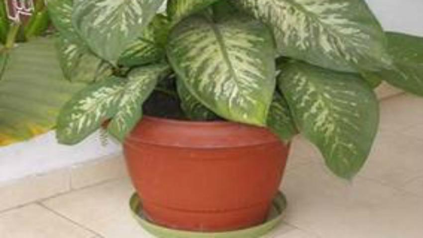 Foto: Ai aşa ceva în casă? Această plantă te poate ucide în mai puţin de un minut!